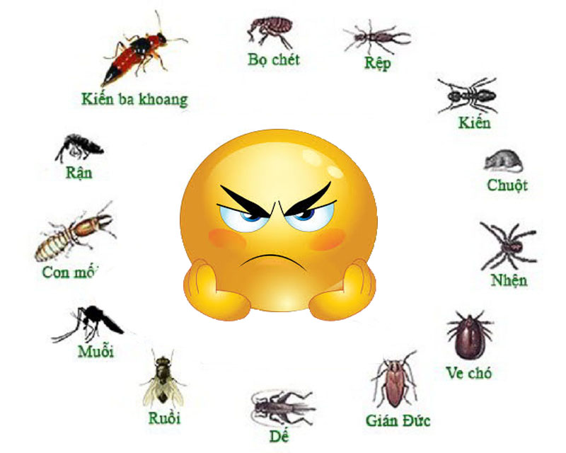 Bực mình với côn trùng