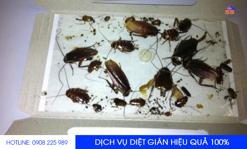 dich-vu-diet-gian-chuyen-nghiep-0