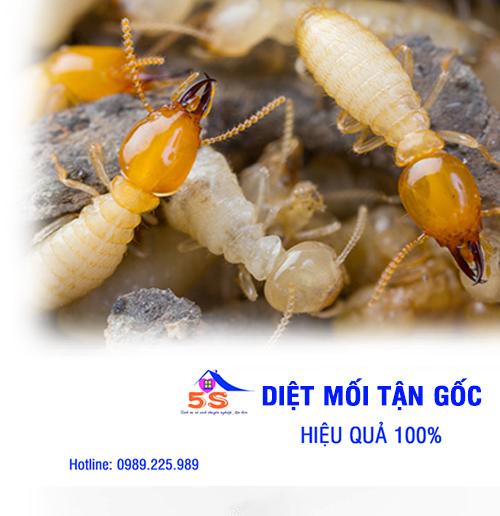 dich-vu-diet-gian-chuyen-nghiep-5