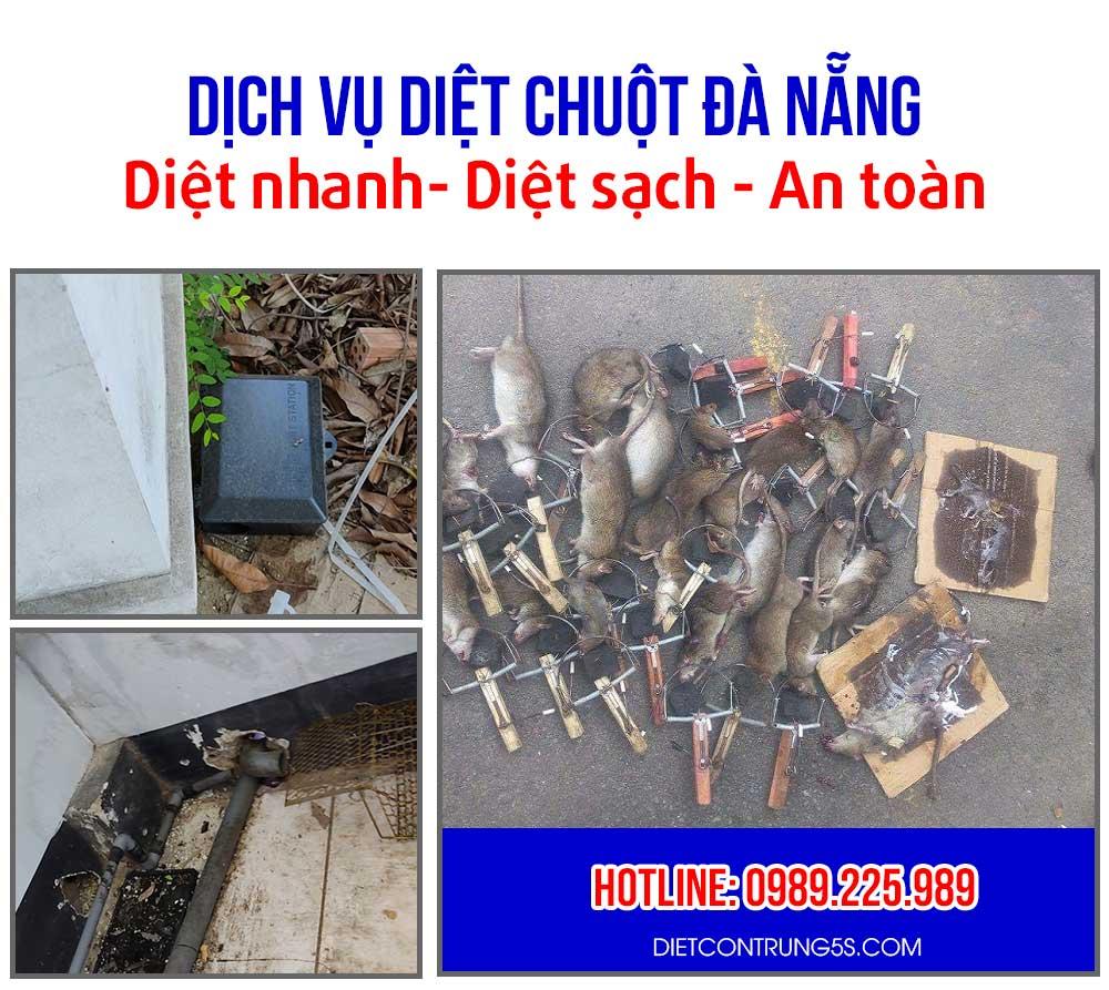 Diệt chuột tại Đà Nẵng